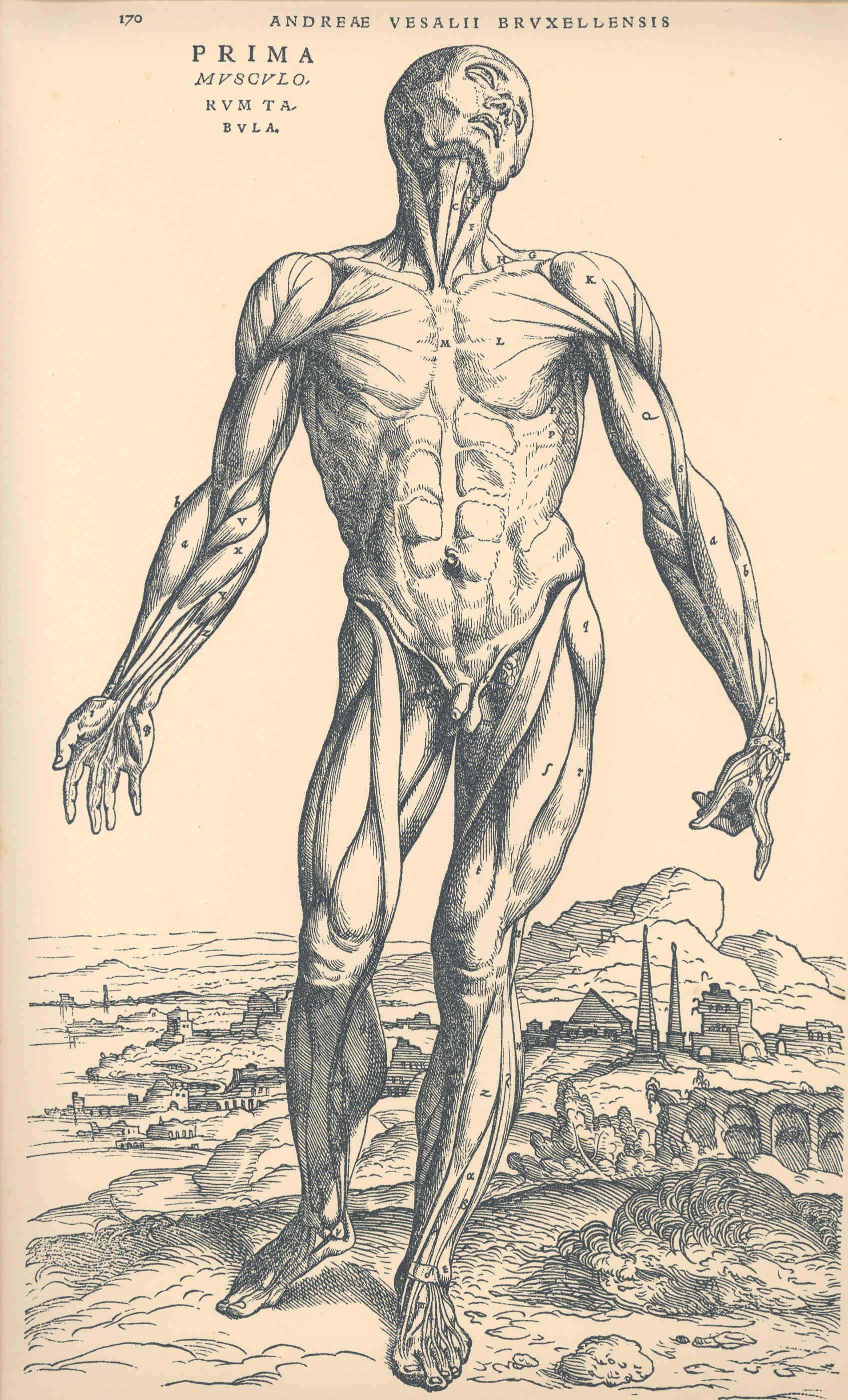 Anatomía y Fisiología - Exposición Permanente - UPV/EHU